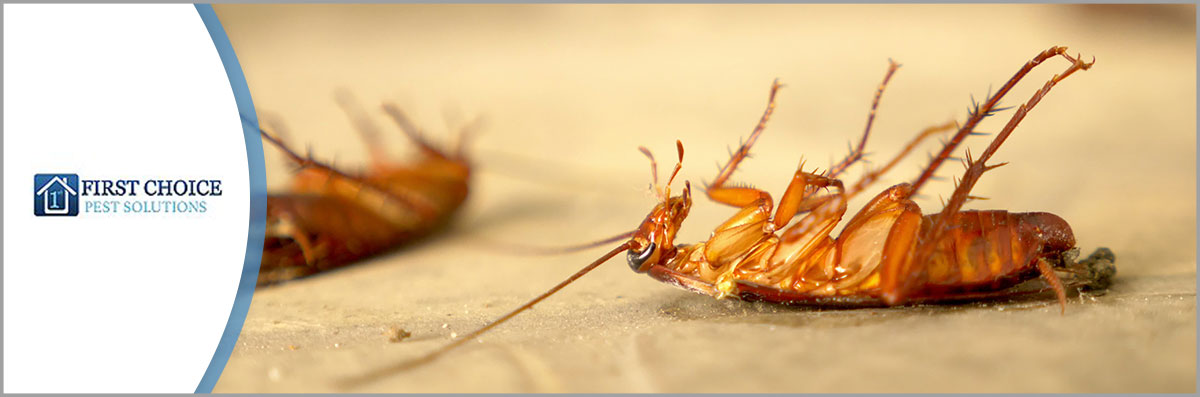 First Choice Pest Solutions LLC Offers Pest Control in Covington, LA