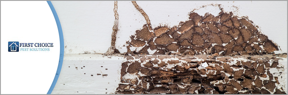 First Choice Pest Solutions LLC Offers Termite Control in Covington, LA