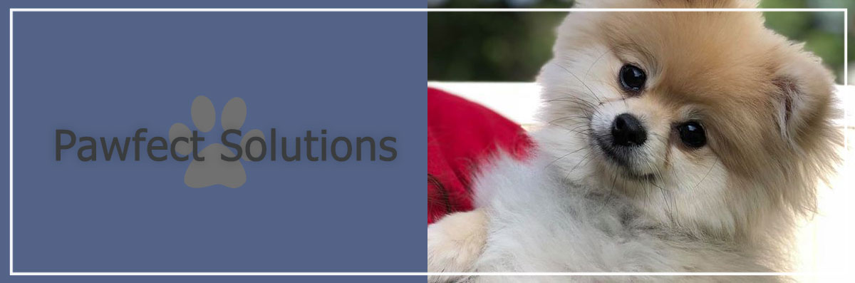 Pawfect Solutions Offers Dog Boarding Services in Brentwood, NY