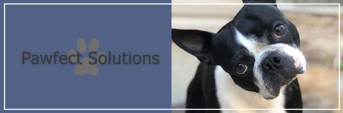 Pawfect Solutions Offers Private Dog Training Lessons in Brentwood, NY