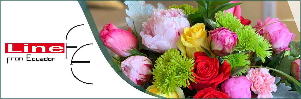 Line From Ecuador Flowers Offers Flower Delivery in Santa Rosa, CA