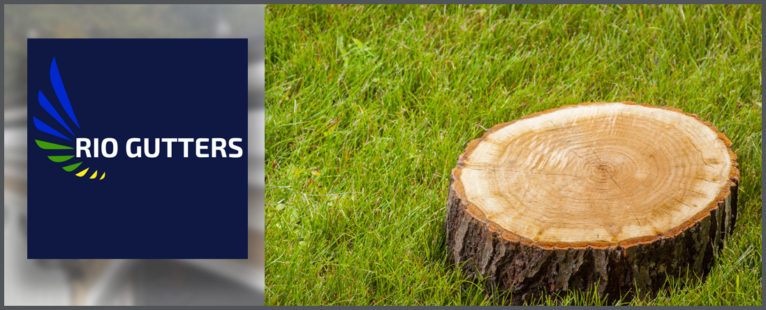 Rio Gutters Offers Tree Service in West Hartford, CT
