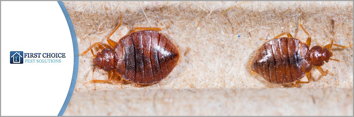 First Choice Pest Solutions LLC Offers Bed Bug Control in Covington, LA