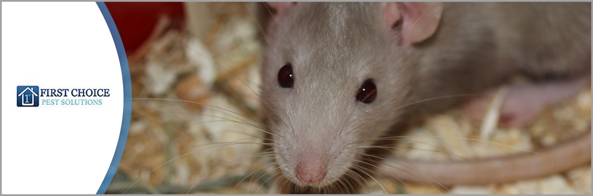 First Choice Pest Solutions LLC Offers Rodent Control in Covington, LA