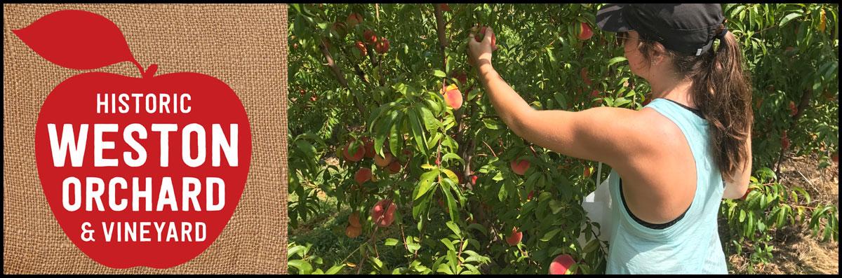 U-Pick Fruit