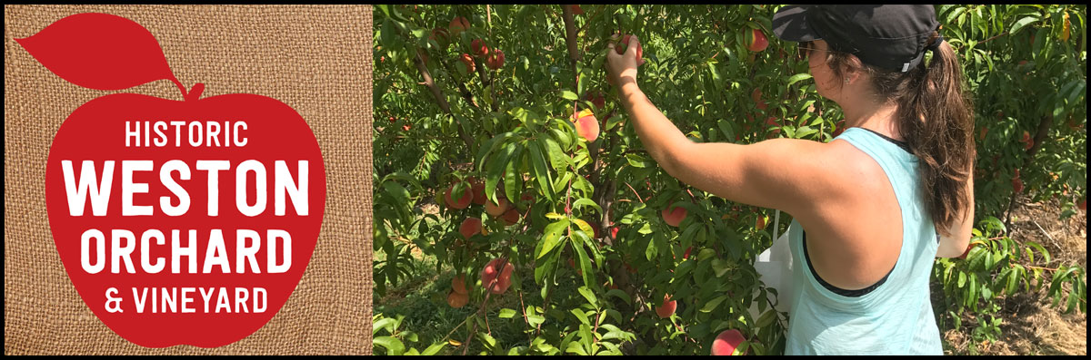 Historic Weston Orchard & Vineyard Offers U-Pick Fruit in Weston, MO