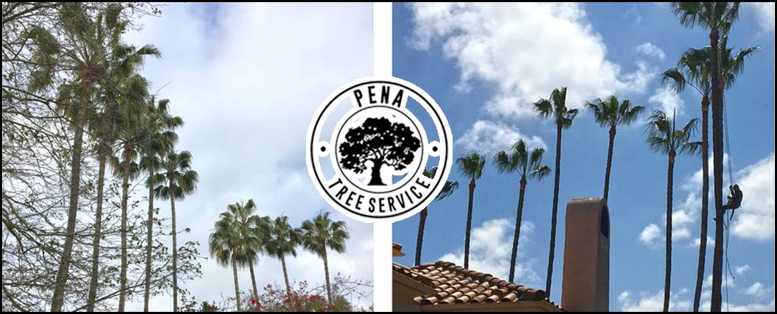 Pena Tree Services Provides Arborist Services in Oceanside, CA