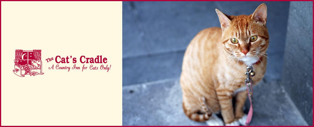 Luxury Cat Boarding & Daily Stay
