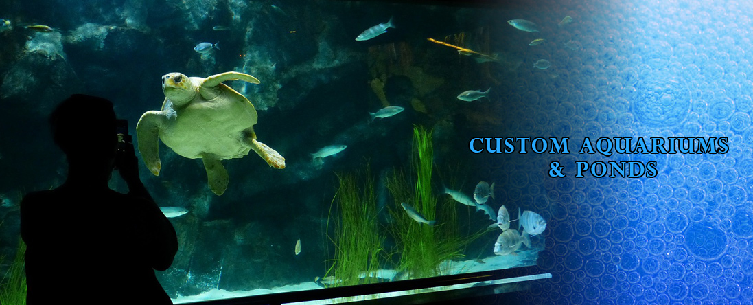 Aquarium Moving & Set Up
