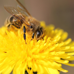 Legal steps taken over concerns of the use of bee-harming pesticides