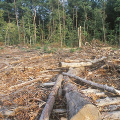 unsustainable deforestation