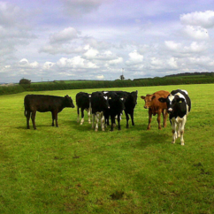 Beef farming is regarded as one of the most carbon-intensive forms of food production