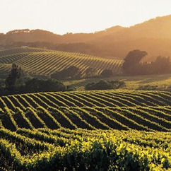 Within 5 years the 60,000 acres forming the Sonoma County Winegrowers Association will be 100% sustainable