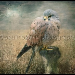Contemporary art by Pauline Fowler Photography