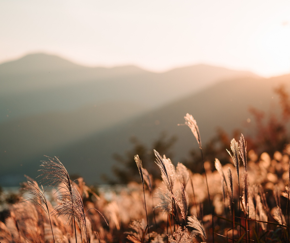shoot-video-in-the-spring-golden-hour-open-field-with-mountains