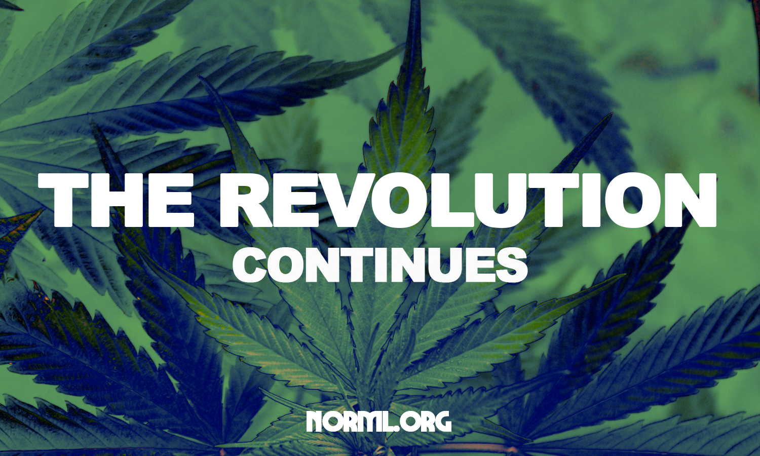 NORML Chapters Prioritize a Wide Range of Reforms for 2019