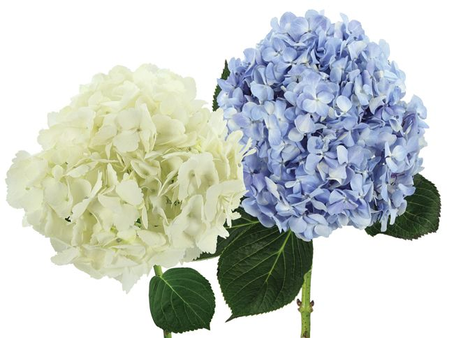 Types Of Wedding Flowers Bride Amp Blossom Nyc Luxury Wedding Florist Serving The Tri State Ny