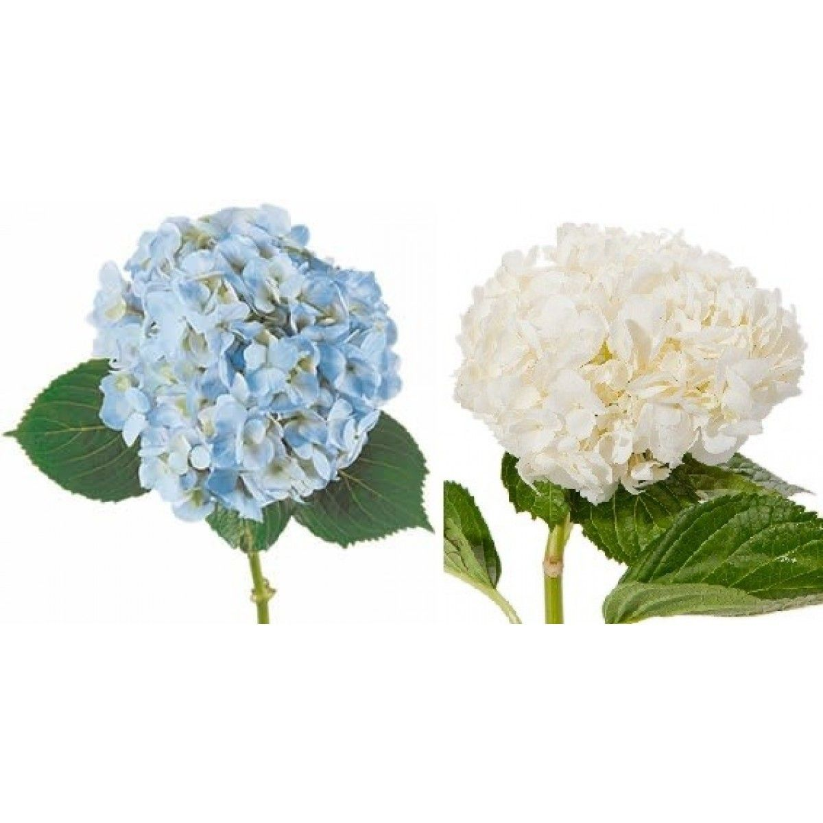 Different Types Of Wedding Bouquets: Bride & Blossom, NYC Luxury