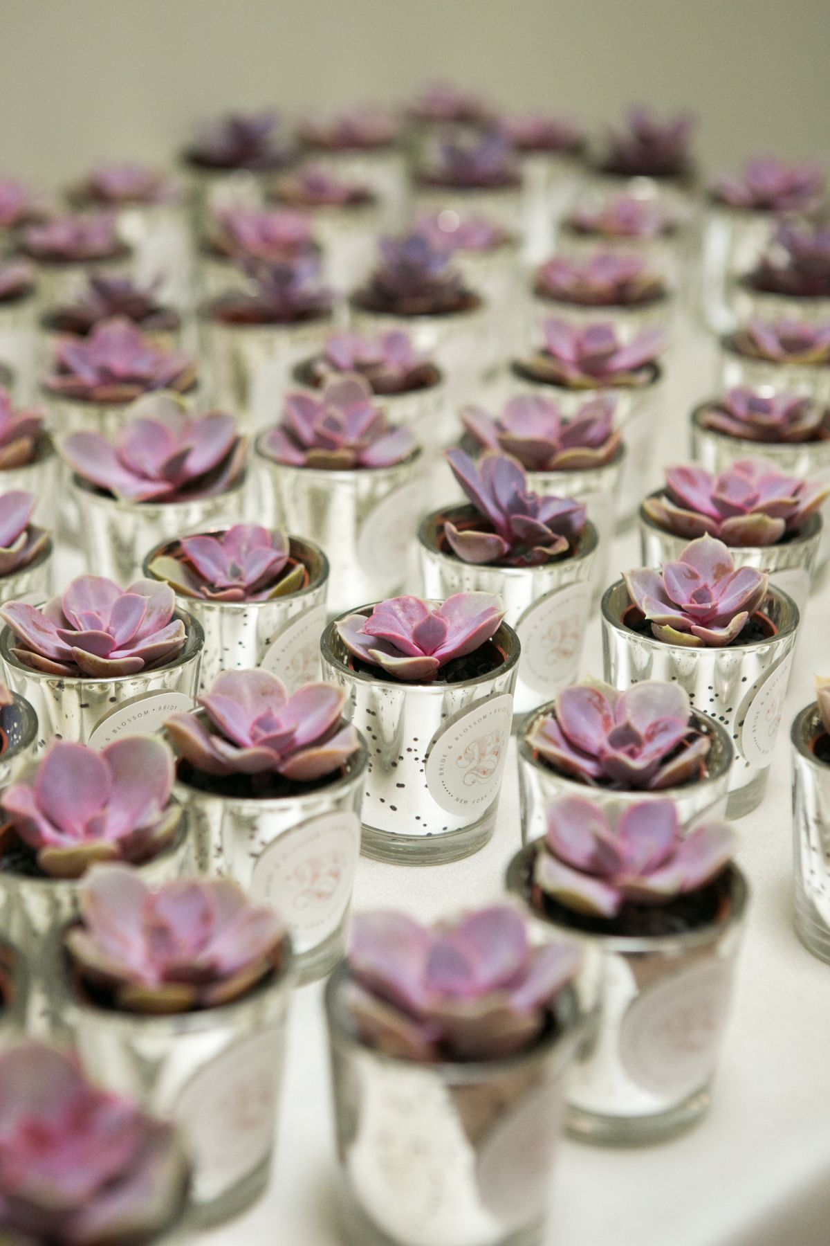 We Love Mini Succulent Party Favors By Bride Amp Blossom Nyc S Only Luxury Wedding Florist
