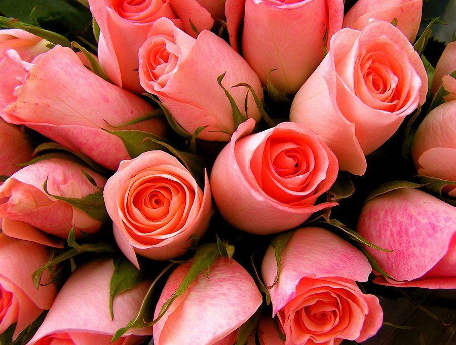 Sweetheart Roses via Deviant Art