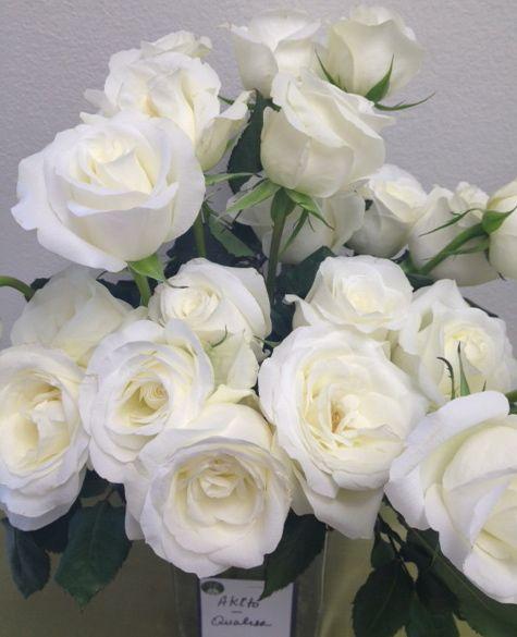 Tibet Roses via Fifty Fleurs