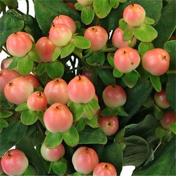 Hypericum-Berries via Fifty Flowers