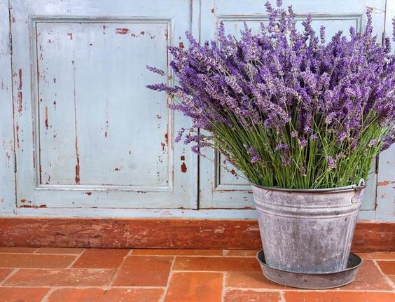 Lavender Flowers via Gardenia
