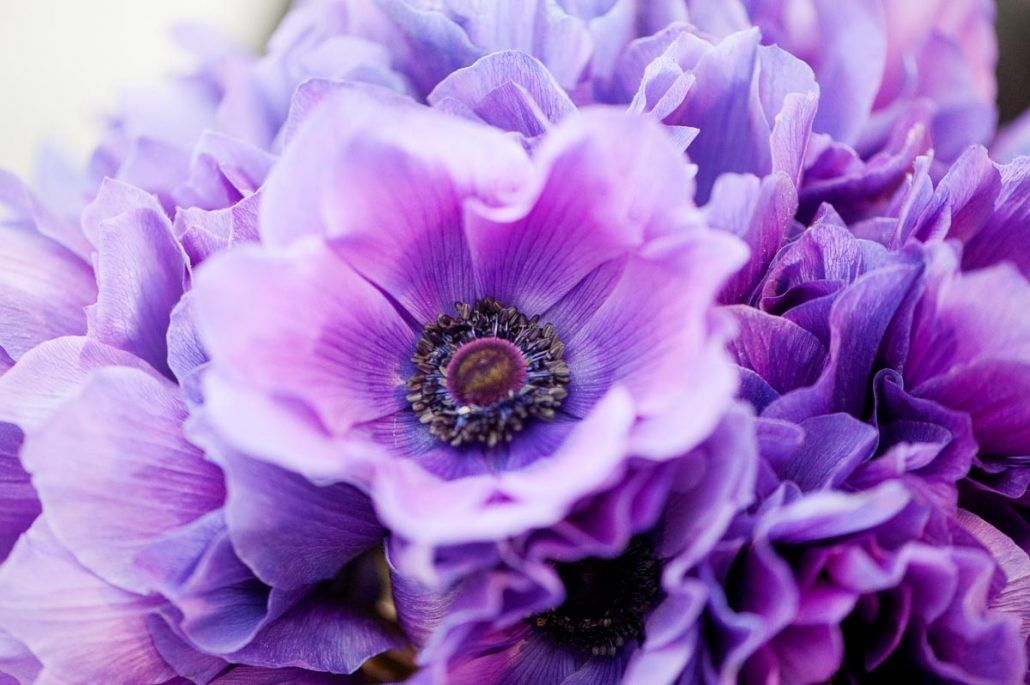 Samantha & Aaron - Purple Anemone - Studio 450 - by Photo Pink Photography