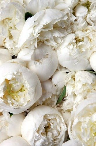 White Peonies - Blooming - via Pinterest.com