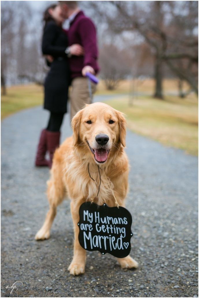 Dog - Engagement Photos - via aprilbphotography.com