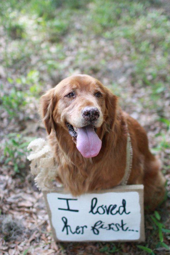 Dog - Wedding Photo - Sign - via southernliving.com