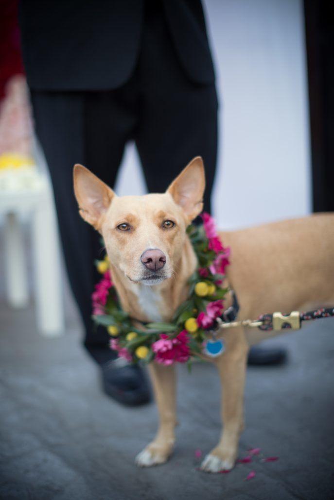 Brad & Manjil - Dog - Flower Wreath - Studio 450 - WeddingsByTwo