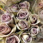 Amnesia Roses - via theflowermonger.co.uk