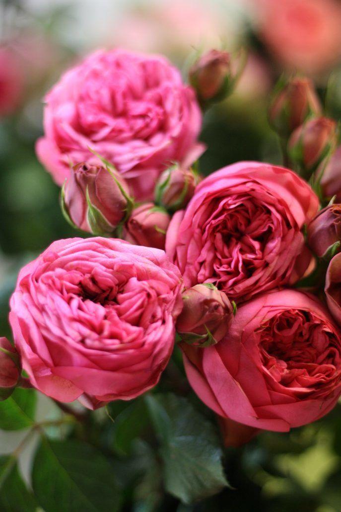 Rose - via flirtyfleurs.com