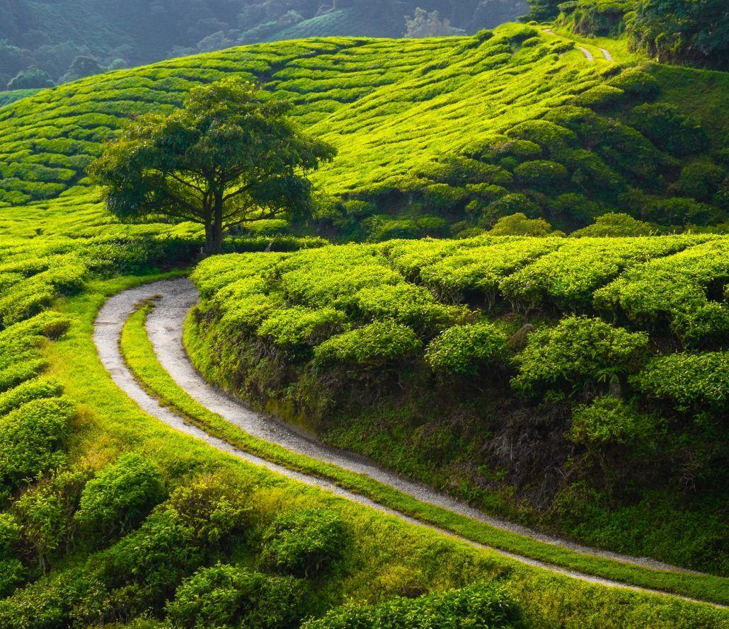 Sri Lanka - image courtesy of alle travel