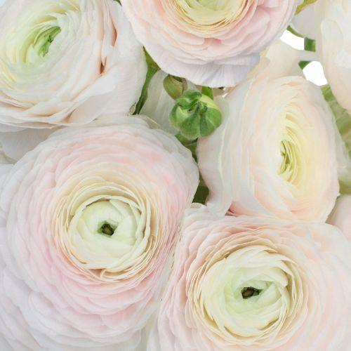 Ranunculus Flower - via fiftyflowers.com