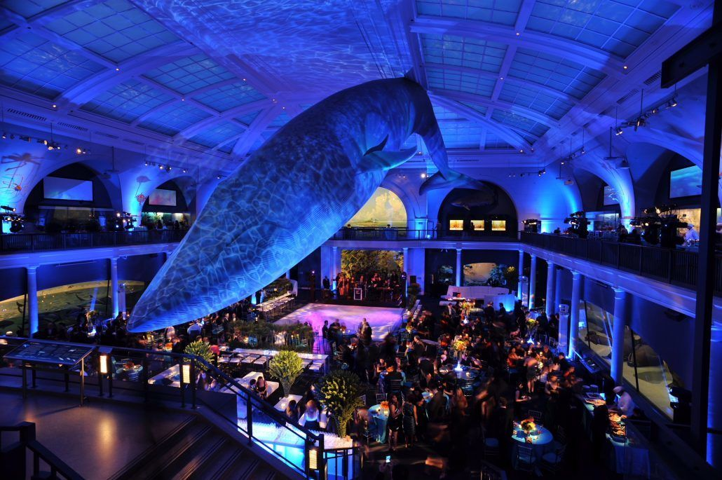 American Museum of Natural History - Image Courtesy of Fusion Productions