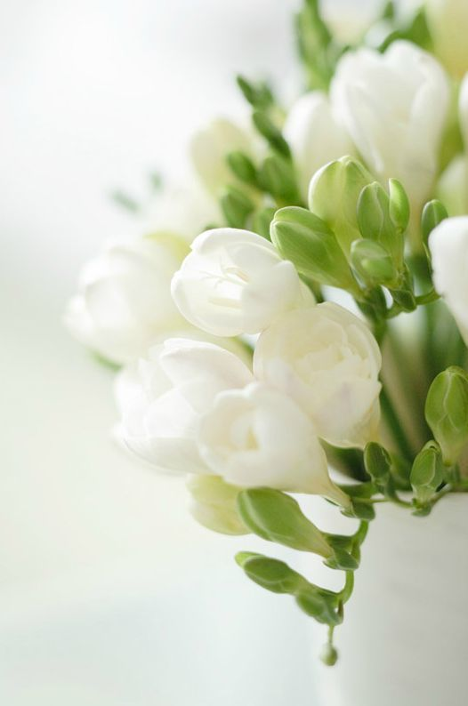 freesia flower - via pinterest.com
