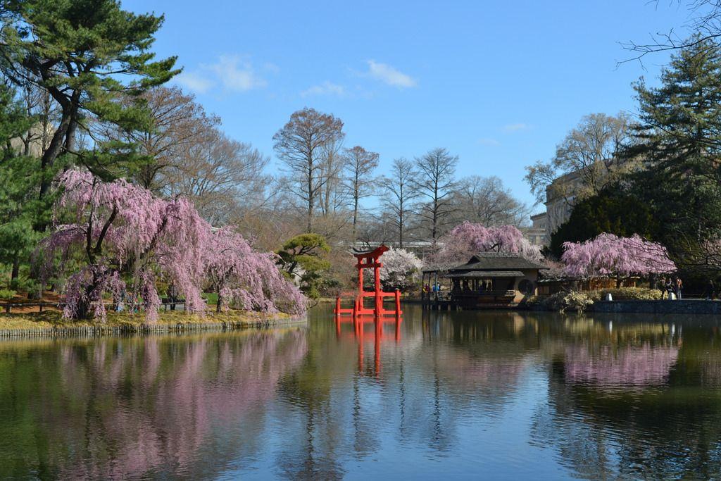 Japanese Garden - via bbg.org