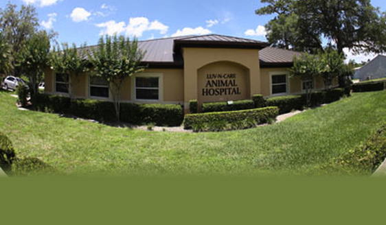 Luv N Care Animal Hospital Pa Veterinarian Longwood
