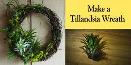 Tillandsia wreath