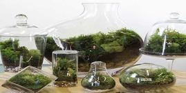 Terrarium tout ce qu il faut savoir pour faire un terrarium