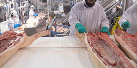 North american meat institute   hog processing plant