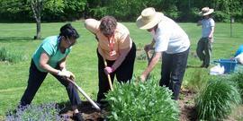 Cceuc making more plants division workshop image (2)