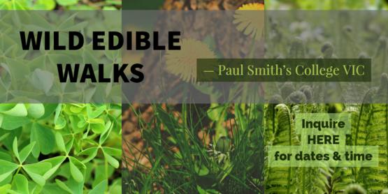 Wild Edible Walks