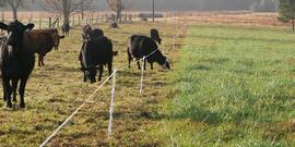 Credits learn.e limu orgstrip grazing