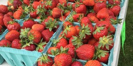 Strawberry season is here!