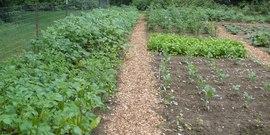 Schuyler gardening18