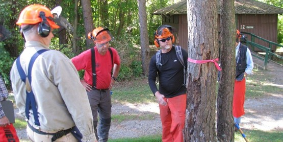 GAME OF LOGGING Chainsaw Safety Program