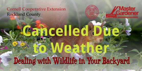 Wildifenew 01 cancelled